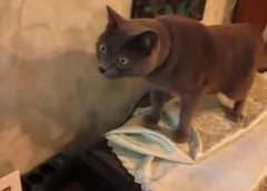 EPIC LAUGH Funniest Scared Cat Home 2019 Best of Funny cat Videos.#7