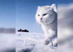FUNNY CATS every day! (05.04.2020) – Cute & Funny Cats Video Compilation