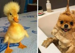 Cutest Baby Animals Videos Compilation Funny Moment of the Animals – Cutest Animals #5